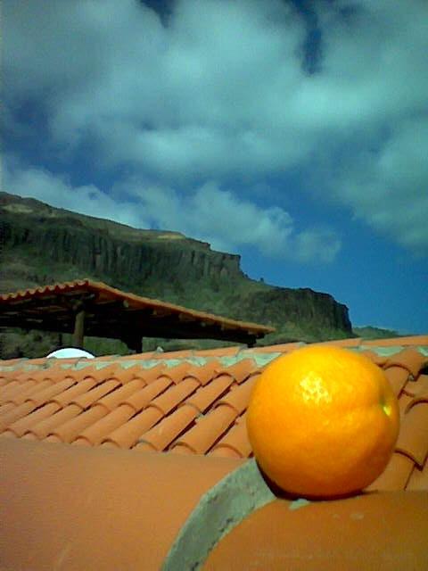 arancia_grancanaria.jpg